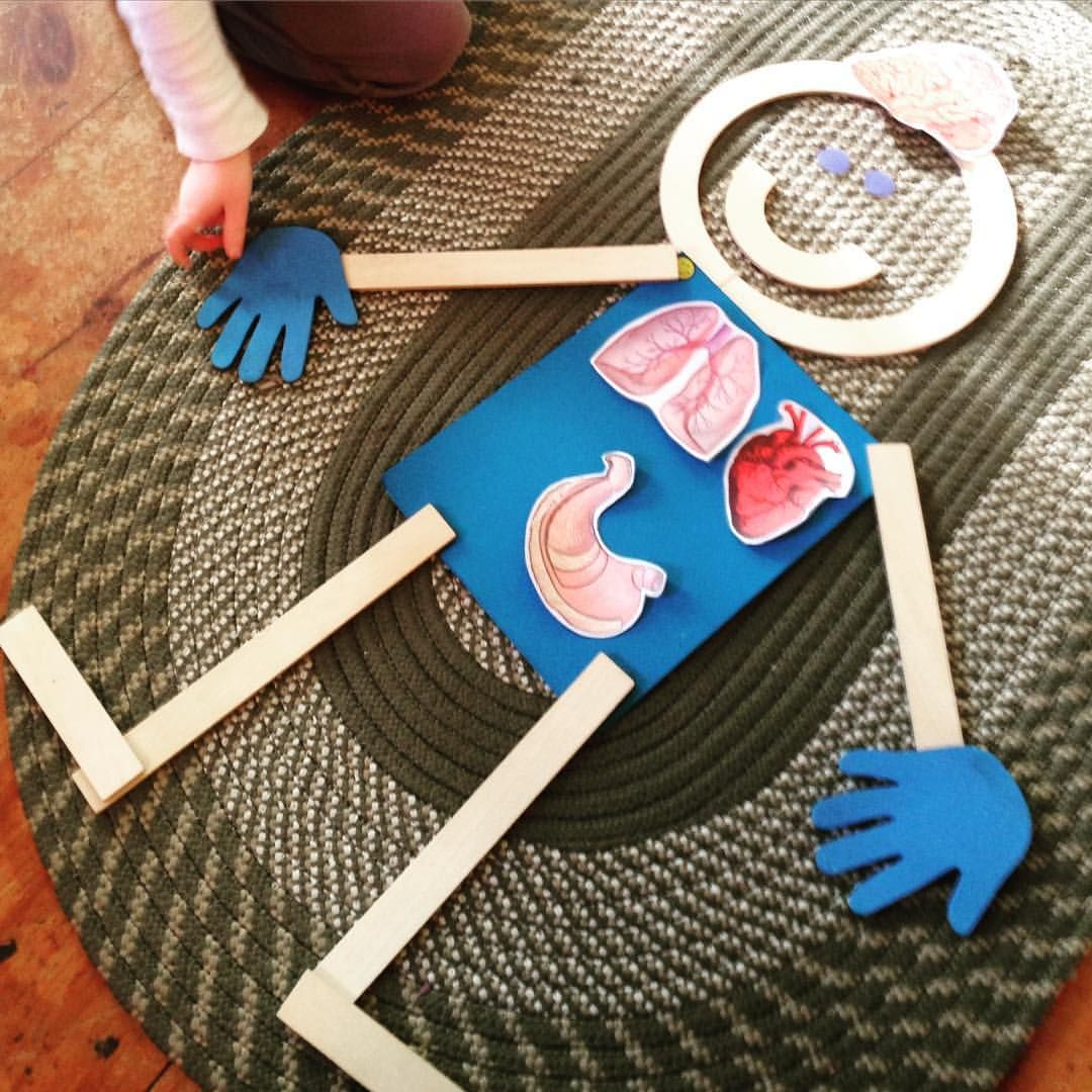 Building Mat Man With A Brain Heart Stomach And Lungs