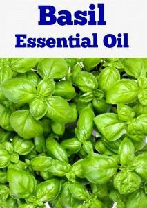 Basil Essential Oil teaches you the properties, safety precautions and uses of this aromatherapy oil. This aromatherapy ebook is also filled with basil recipes which show you how you can use this natural plant extract to treat conditions like acne, anxiety, depression, stress, constipation, nausea, fever, migraines, mental fatigue, muscle aches, coughs and colds. $2.99