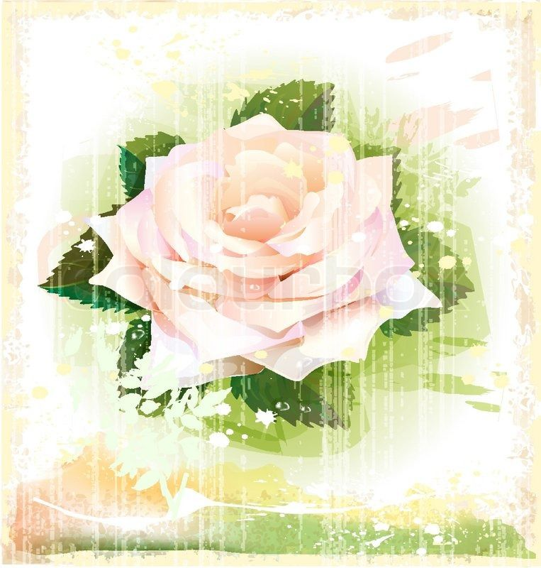 Vector rose on a vintage background | Vector | Colourbox