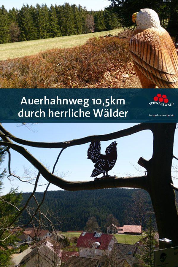 Auerhahnweg Schwarzwalder Geniesserpfad In Schramberg Tennenbronn Schwarzwald Tourismus Wandern Schwarzwald Tourismus