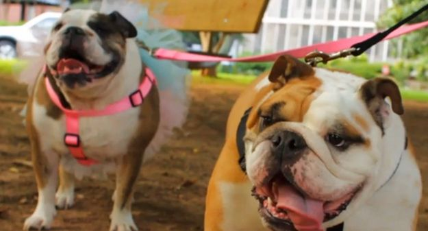 Barkbox Is A Big Fan Of Bulldogs All You Need Is Love And A Dog