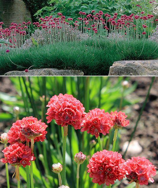Bodendecker für fantastische Gartengestaltung