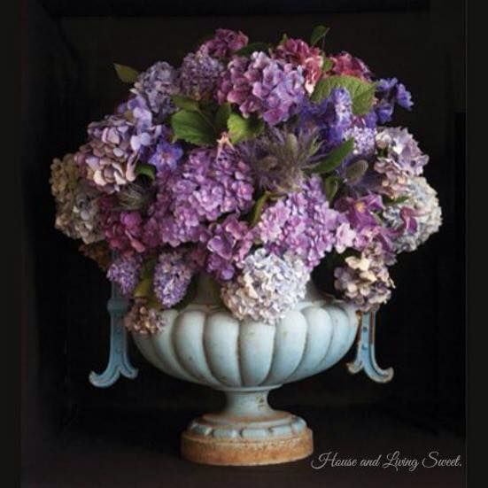 These are such beautiful Hydrangeas in this classic Urn.