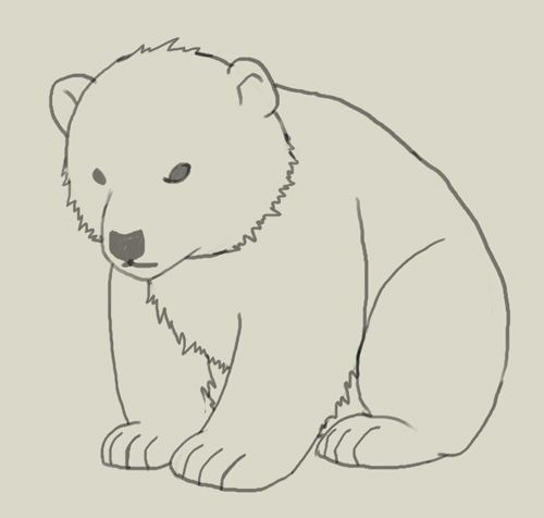 How To Draw Polar Bear Cub Drawing And Digital Painting