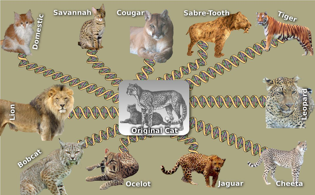 website against yec science resources bengal tiger tigers wildlife india national [ 1213 x 751 Pixel ]
