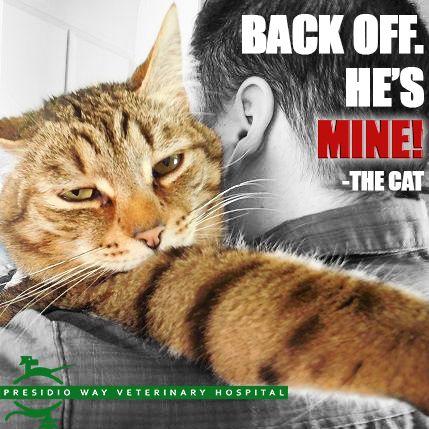 Message Received Presidioway Cathumor Catsofpinterest Kitty Catlover Cats Meow Pets Catoftheday Lovecats Ilovecats Ador Animal Antics Animals Cat Day