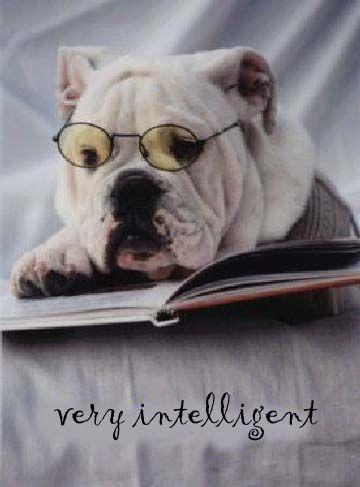 Pin By Carol Frey On Bulldogs English Bulldog Bulldog English