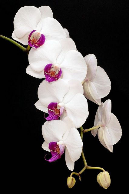 Orchids. My fave.