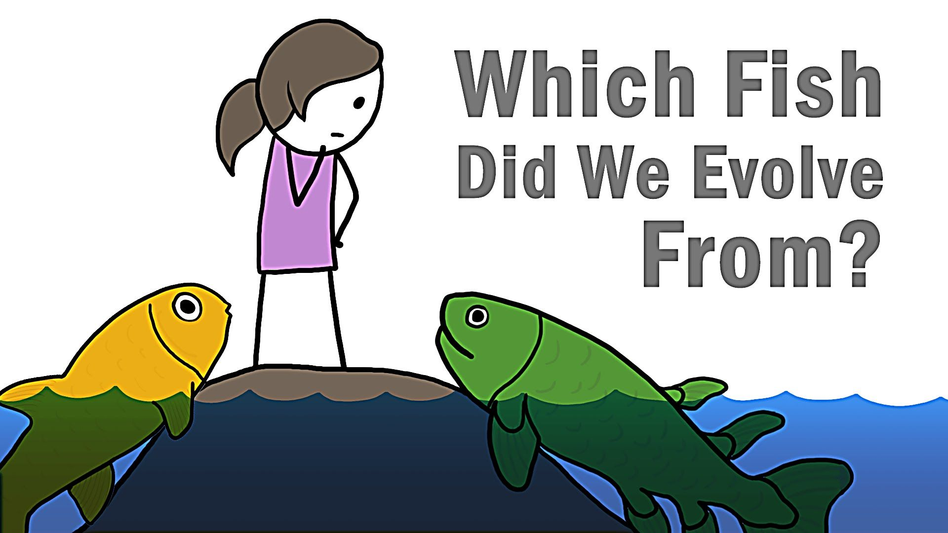 Which Fish Did We Evolve From Homeschool Science Geologic Time