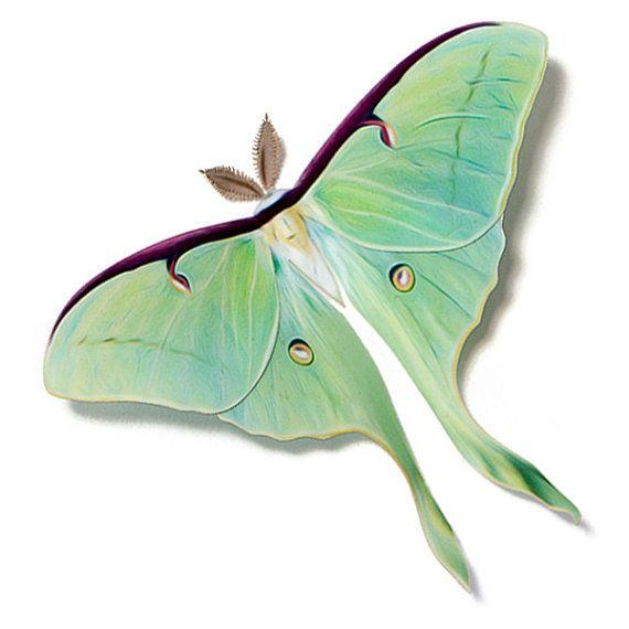Frau Luna Motte 4 5 Papercut Dekoration Luna Moth Luna Moth Tattoo Moth Tattoo