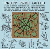 Food Forests  Plant Guilds im PermakulturDesign Family Food Garden