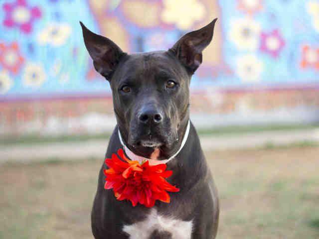 Arizona Humane Society 602 395 3874 Id A472980 Humane Society Animals Animal Shelter