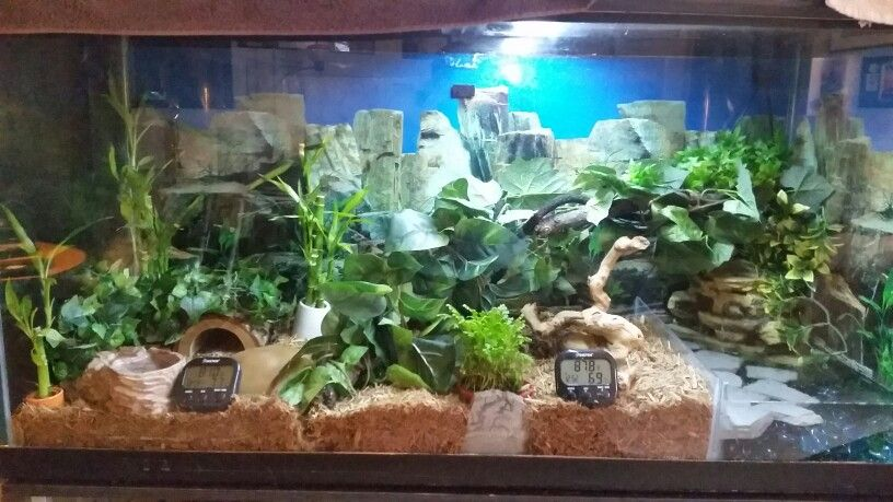My Snake Terrarium With Waterfall And Live Plants For My Ball Python