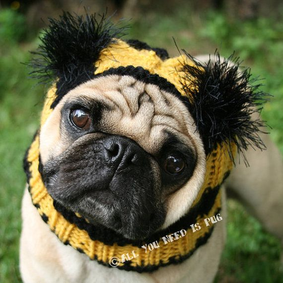 Dog Hat Bumble Bee Hat The Original Pug By Allyouneedispugshop