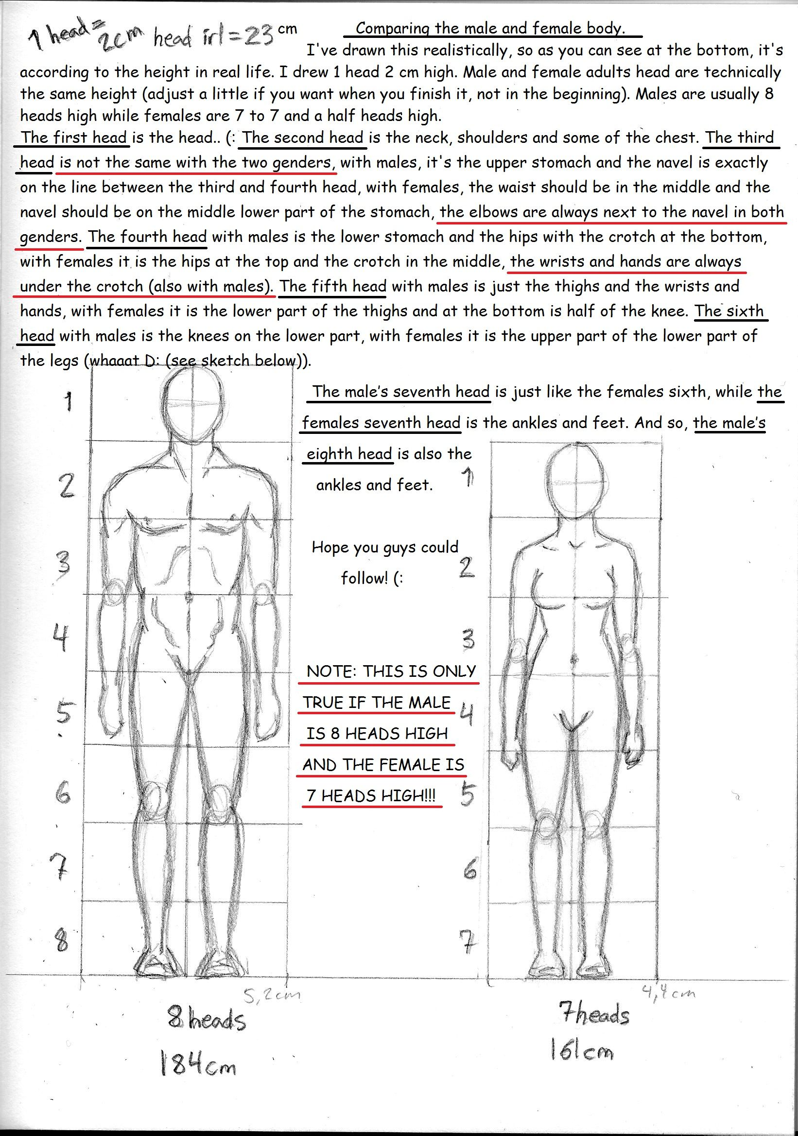 Male And Female Anatomy Guide Between Differences By Ninawesth