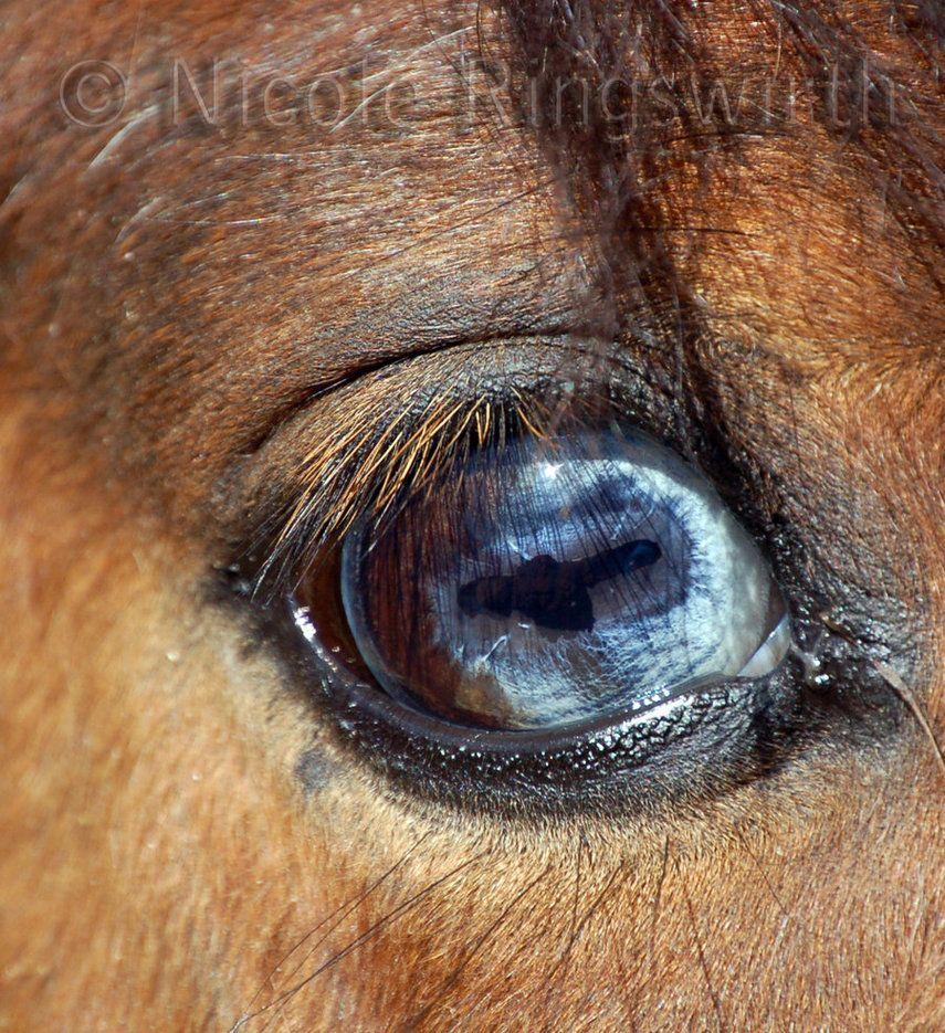 Blue Eye Partial Brown Eye Colors Pinterest Blue Eyes Eye And