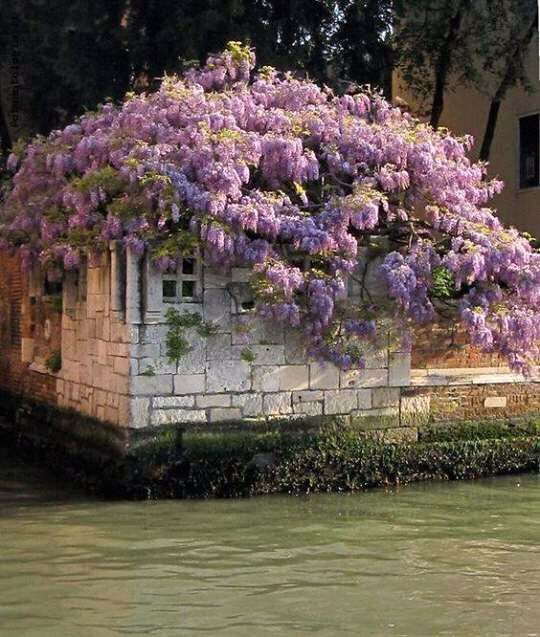 All the beauty things flores y plantas pinterest for Jardines venecia