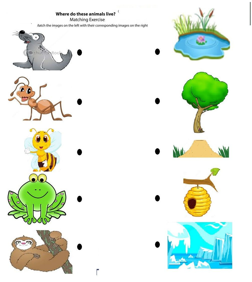 free printable matching animals to their home worksheet (7) | Pre ...