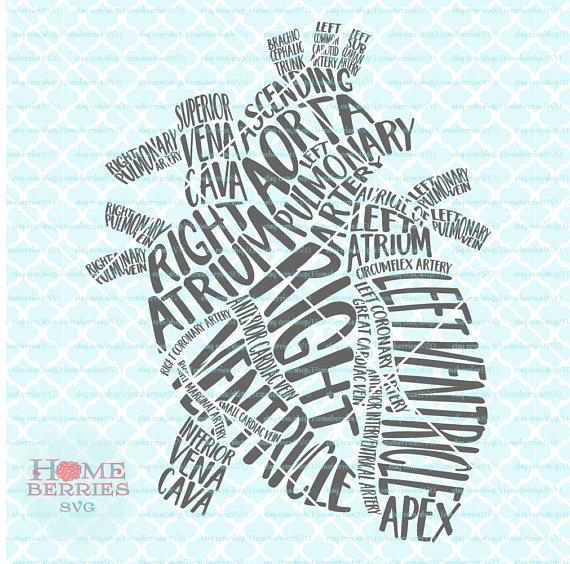 Heart Typography Gross Anatomy Of The RN Nurse Doctor