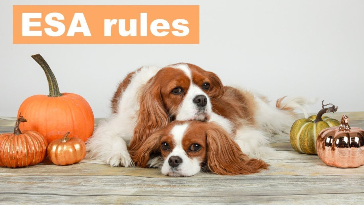 ESA RULES HAVE CHANGED! Emotional support dog, Support