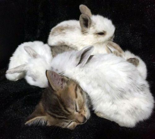 Baby Hasen können nicht genug von kitten Wärme erhalten