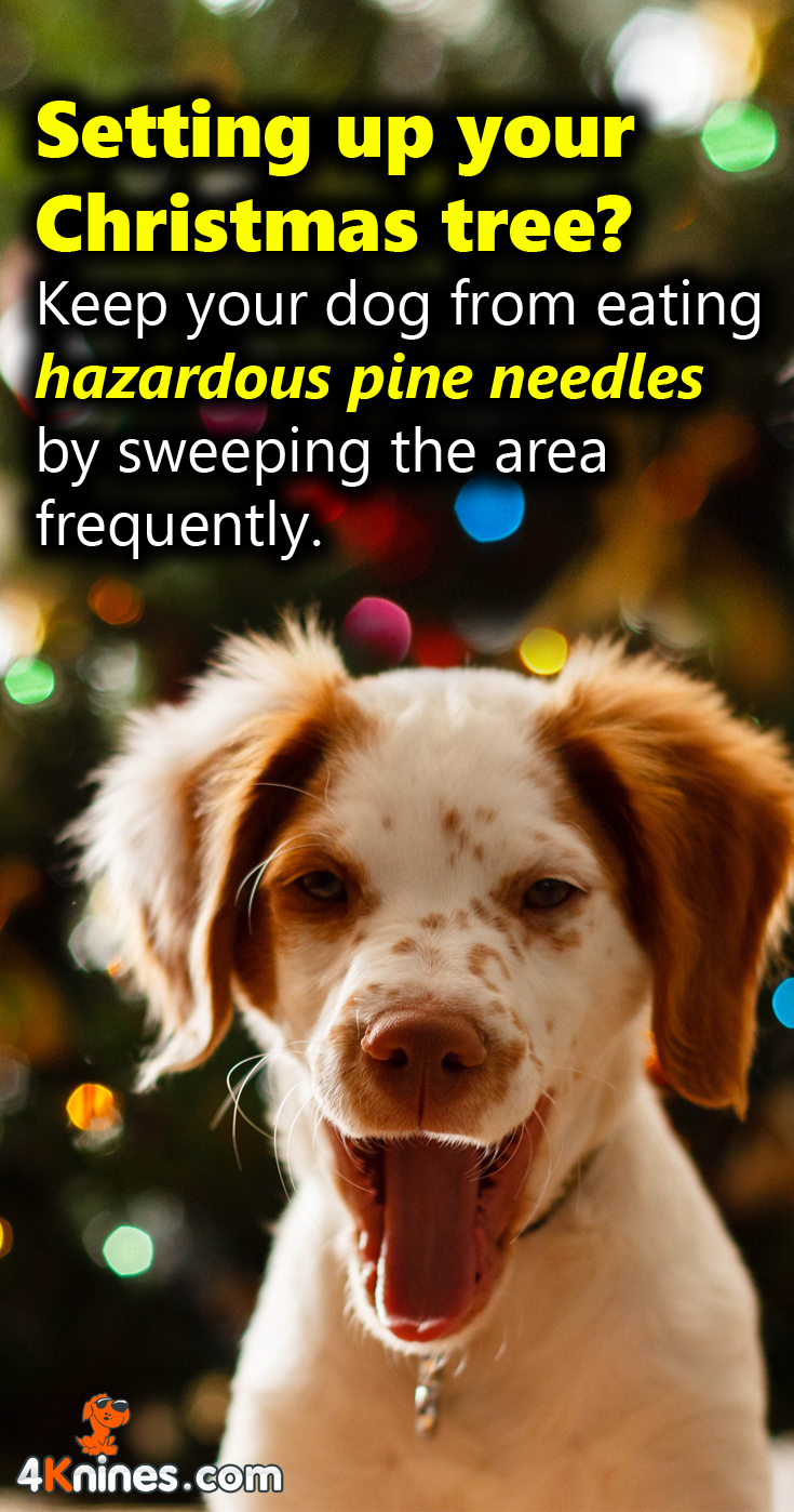 Pine Needles And Dogs : needles, Needles,, Although, Toxic,, Cause, Serious, Discomfort, Ingested, Minimize, Your…, Covers,, Seats,, Carseat, Cover