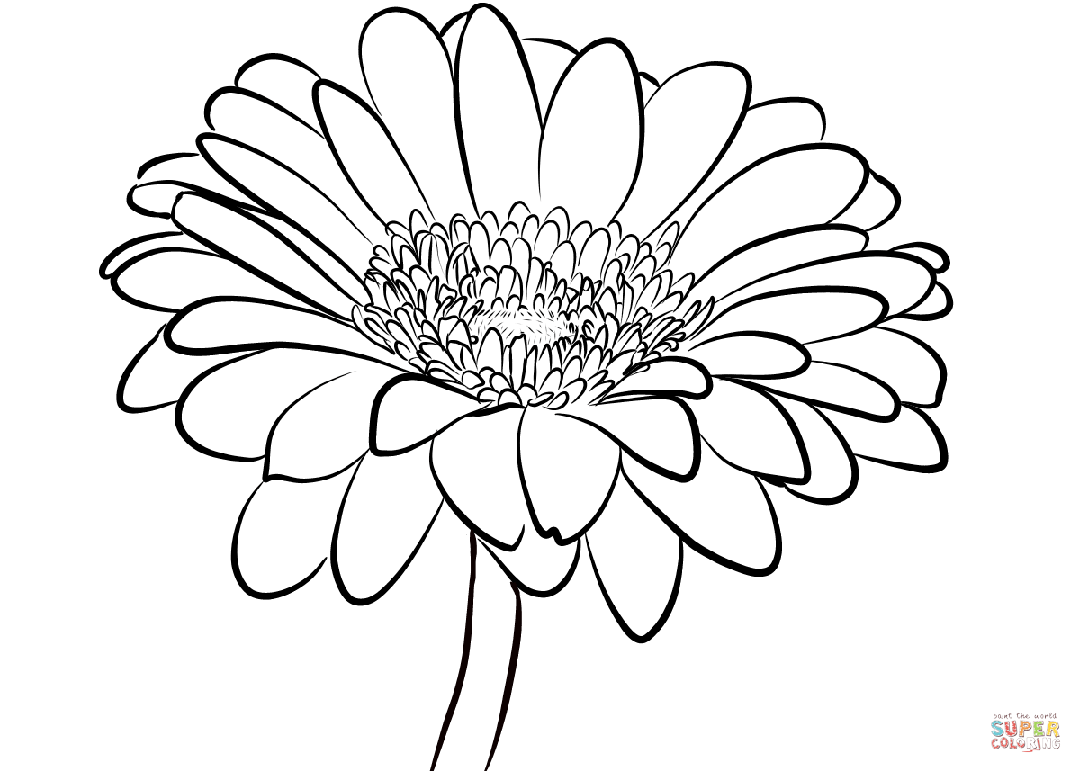 Gerbera Daisy Coloring Page Free Printable Coloring Pages Daisy Drawing Daisy Flower Drawing Flower Drawing