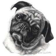 Cute And Realistic Drawing Of A Pug Animal Drawings Dog Drawing