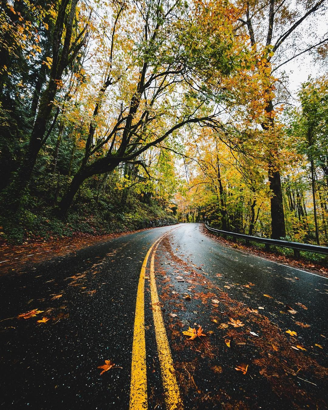 Rainy Autumn Road (Seattle, Washington) By Seattle