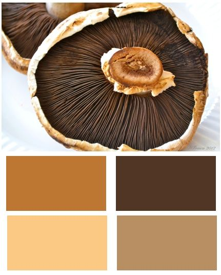 Sage And Brown Color Schemes: Earth Colour Palette, Earthy