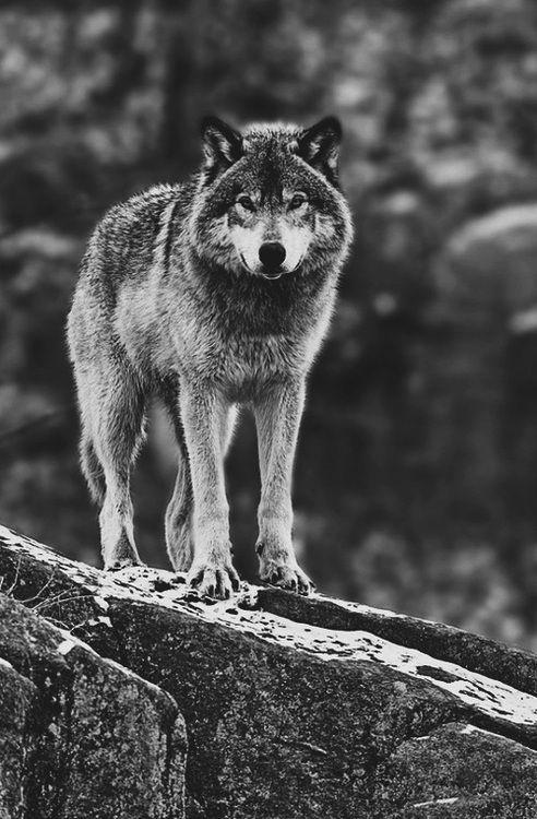Mum; & da hatte der Wolf die Großmutter gefressen. Lisa; Ist der Wolf den auch satt?