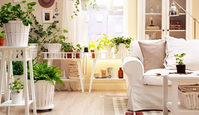 Sala con muchas plantas decoraci n pinterest for Casas decoradas con plantas naturales