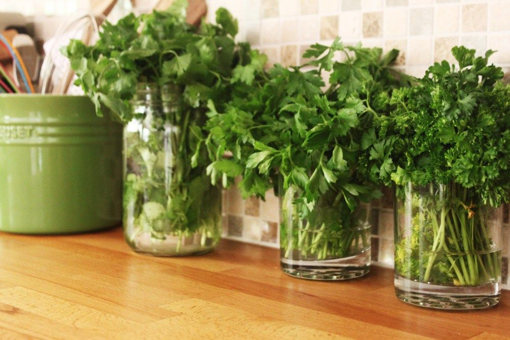 how to preserve cilantro and parsley