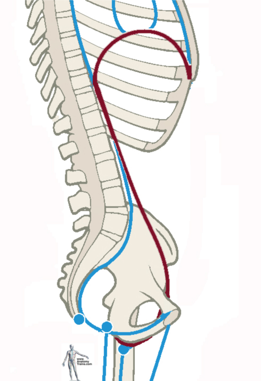 26+ Cobra Core Support   Anatomy Trains Blog