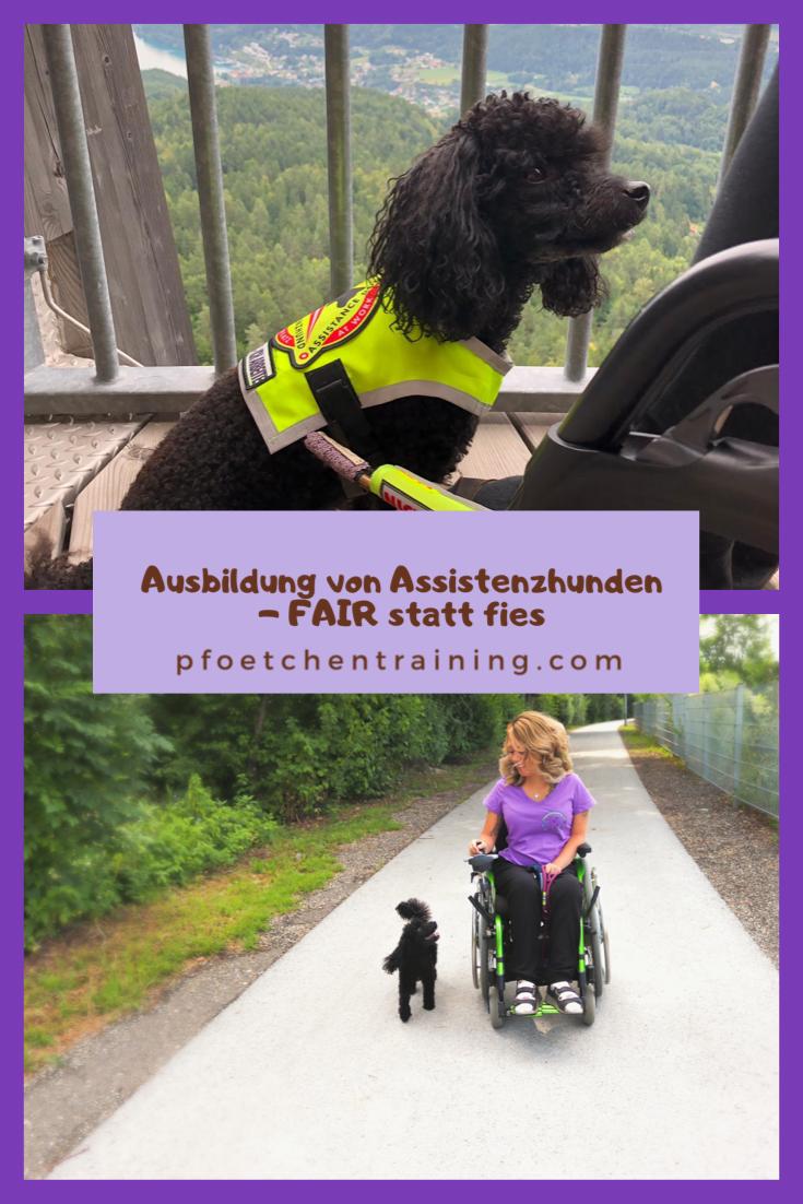 Assistenzhunde Ausbildung Mit Positiver Verstarkung Fair Statt Fies Hundchen Training Hundetraining Hunde