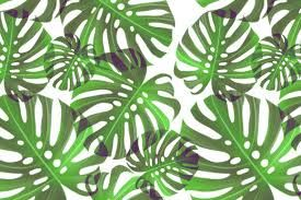 Explore Graphic Patterns Leaf And More Image Result For Palm Leaves Tumblr