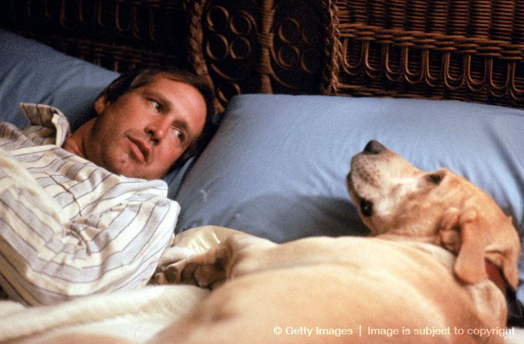 Funny Farm One Of My Favorite Movies Well Hello Yellow Dog