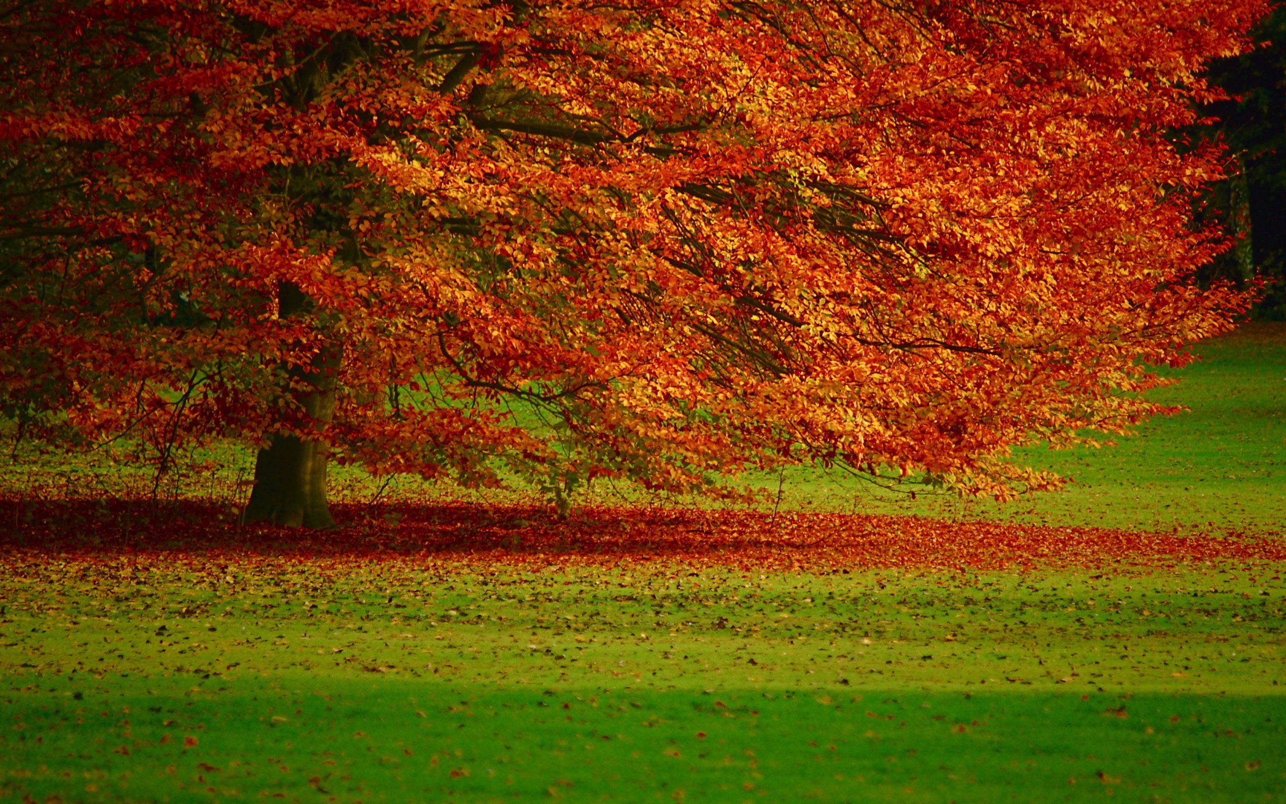 windows desktop backgrounds fall