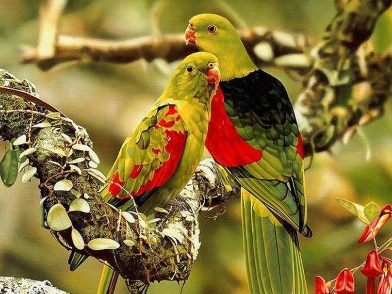 Colorido Angry Birds Personagens Vector: Pássaros Coloridos Vetor