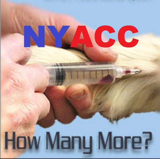 Investigate New York City Animal Shelters In Violation of Humane Laws and the Public Trust - THIS PETITION HAS ALREADY BEEN SERVED, BUT IT REMAINS OPEN FOR ADDITIONAL SIGNATURES. IF YOU FEEL SO MOTIVATED, PLEASE SIGN AND SHARE. YOU DO NOT HAVE TO LIVE IN NYC OR EVEN THE U.S. TO SIGN.