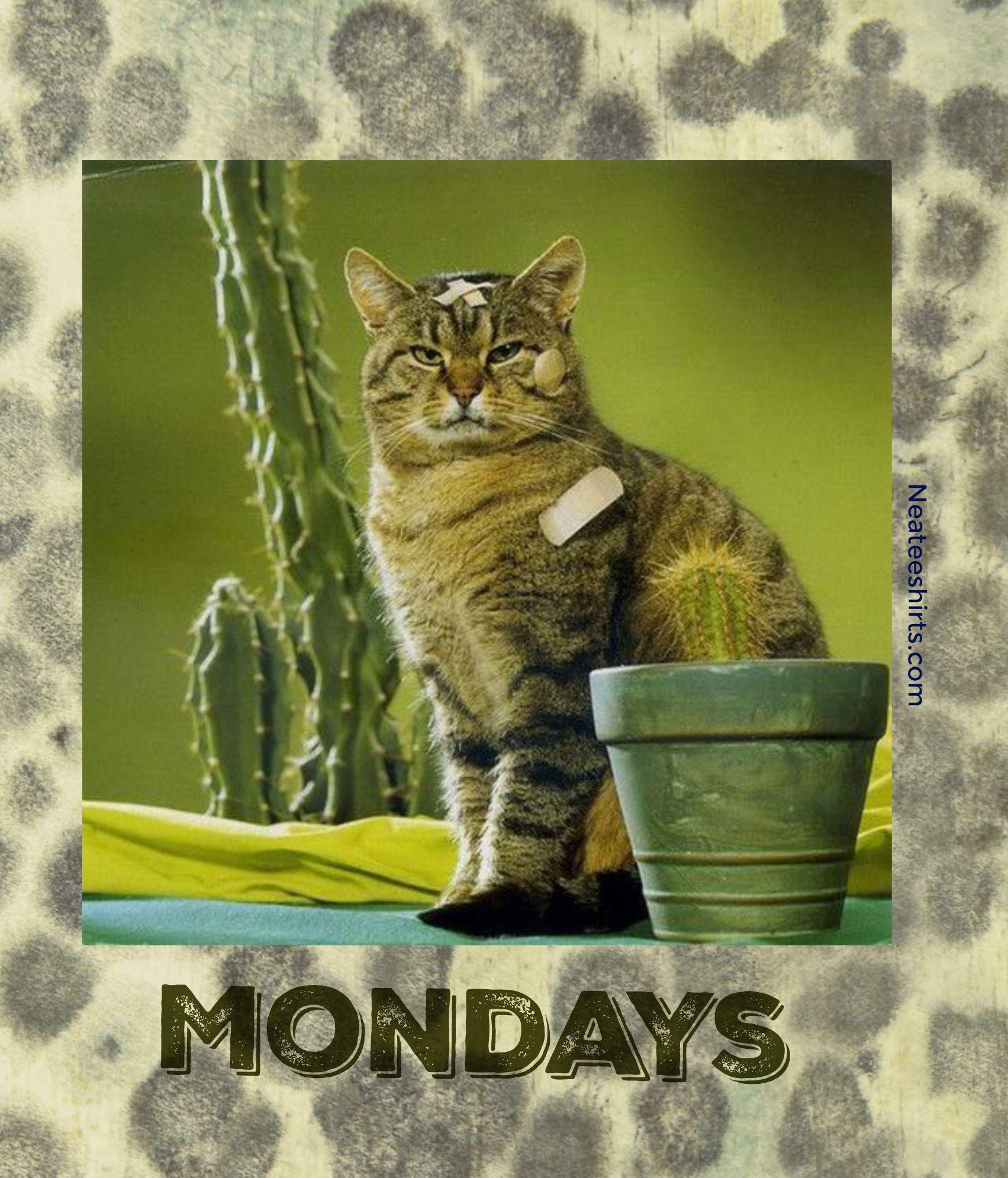 Yes, Mondays hurt.