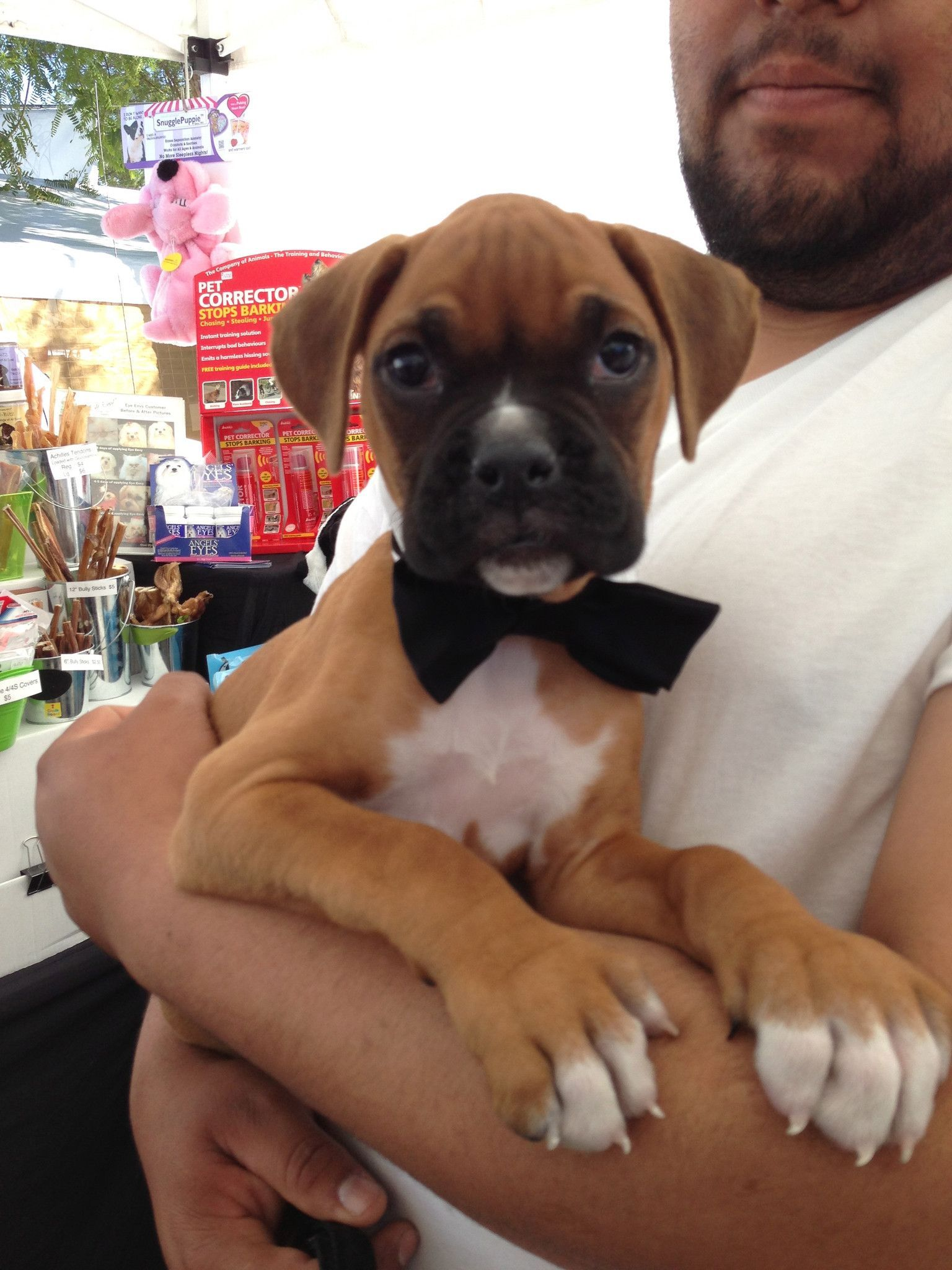 Pet Tuxedo Collar And Bow Tie Boxer Puppies Boxer Dogs Boxer Dogs Funny