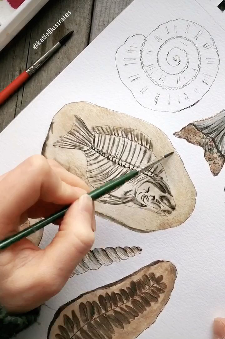 Short timelapse of a watercolor fossil nature painting, enjoy! #fossil #fish #geology #science #nature #artvideos