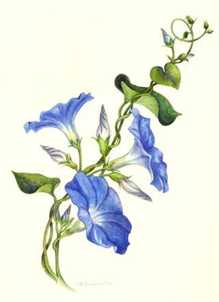 the color of summer is morning glory vine vine tattoos and tattoo rh pinterest com morning glory tattoo ideas morning glory tattoo watercolor