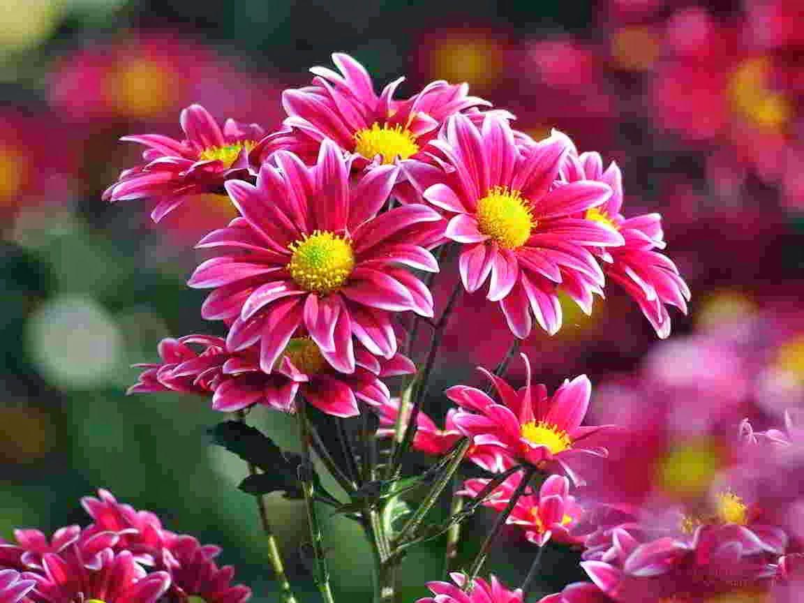 Pin Di Manfaat Bunga Untuk Kesehatan
