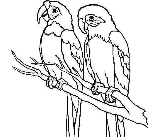 Dibujo De Loros Para Colorear Bird Drawings Bird Coloring Pages Art Kit