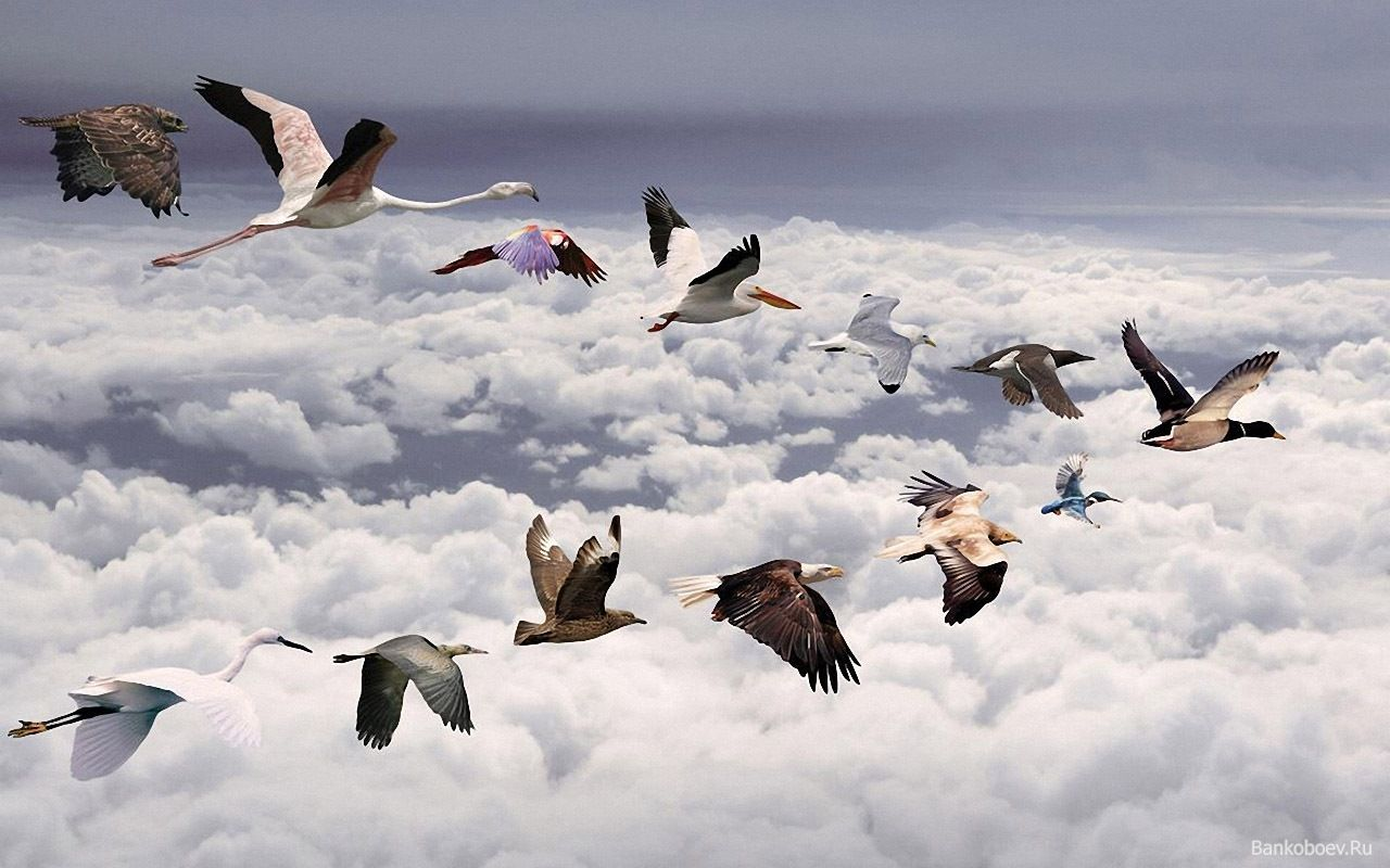 Mixed Flock Of Birds Flying In A V Formation Put Together