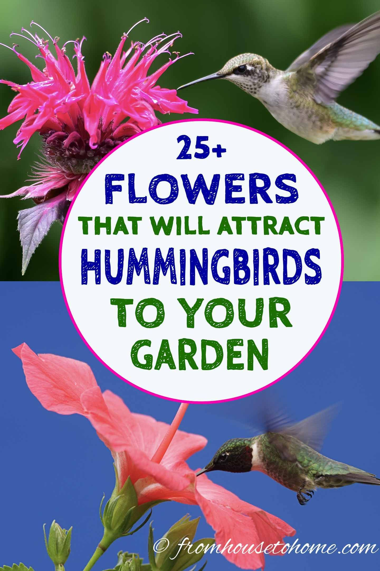 Hummingbird Plants 25 Of The Best Flowers That Attract Hummingbirds Gardening From House To Home Flowers That Attract Hummingbirds Hummingbird Plants How To Attract Hummingbirds