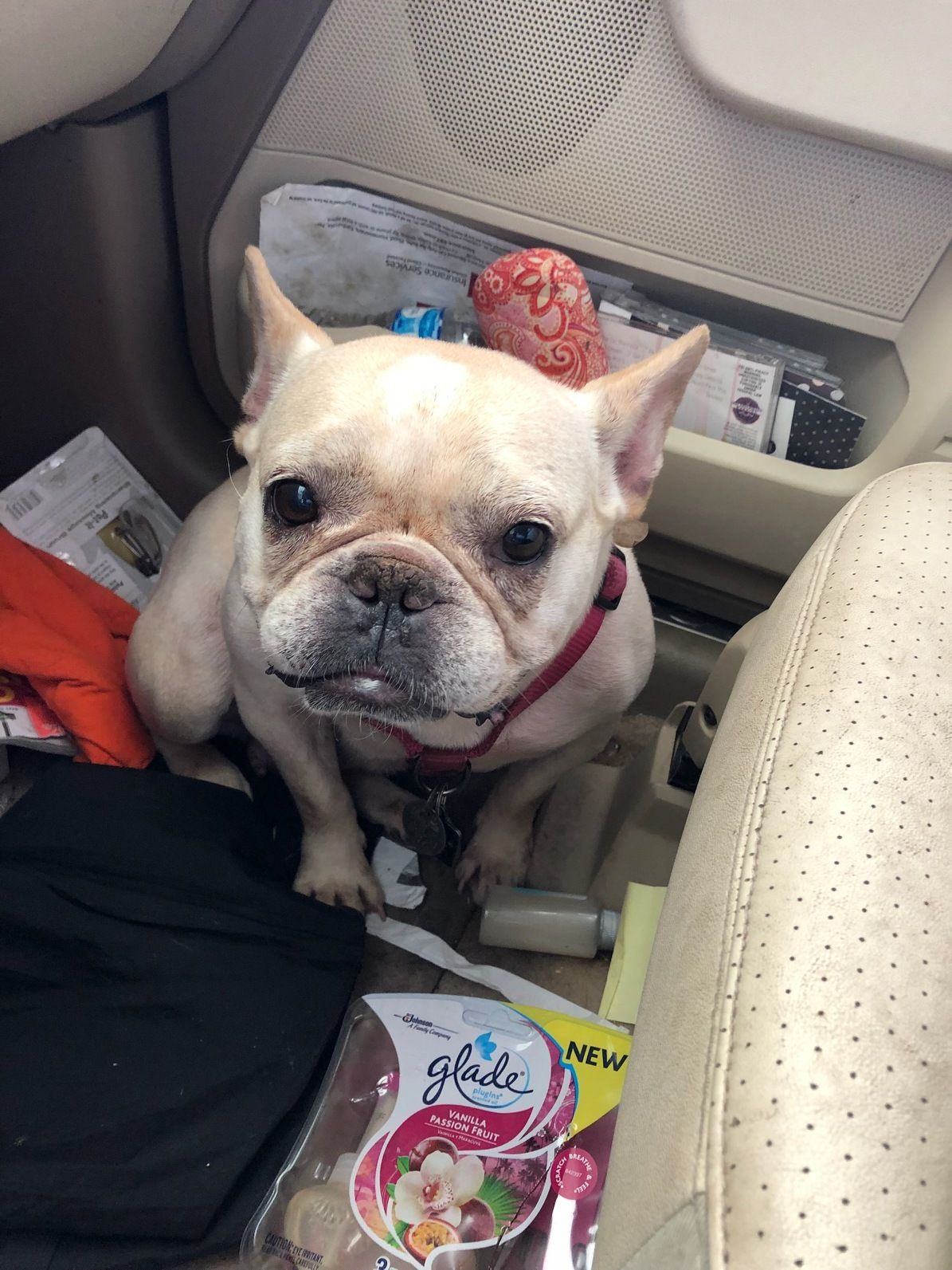 Adopt Stitch On Animals French Bulldog Pets Dogs