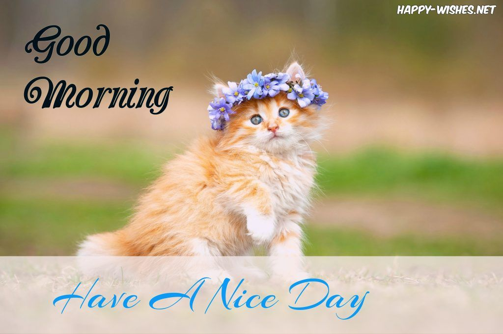 Good Morning Images With Beautiful Cat Images Fluffy Cat Breeds Cute Animal Pictures Kittens Cutest